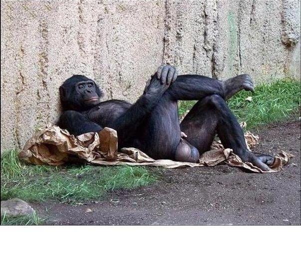 а танцую я не очень демотиватор обезьяна