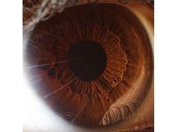 Макро фотографии глаз