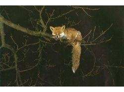 Животные рисунки лиса