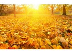 Картинки осень листопад 7