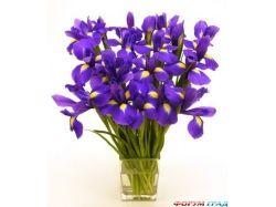 Цветы картинки для форума
