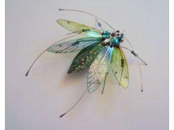 Самые интересные насекомые фото