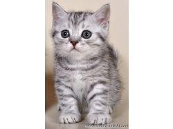 Котенок из рекламы фото