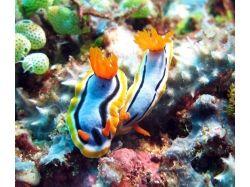 Подводный мир дельфины фото 7