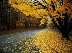 Осень и любовь фотографии, картинки