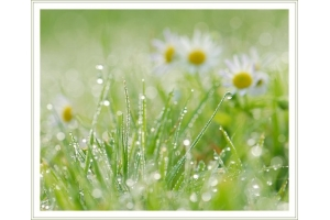 Фото роса на траве