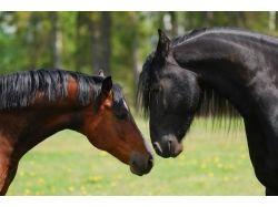 Лошадиные породы разные картинки лошадей