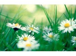 Обои, картинки цветы 7