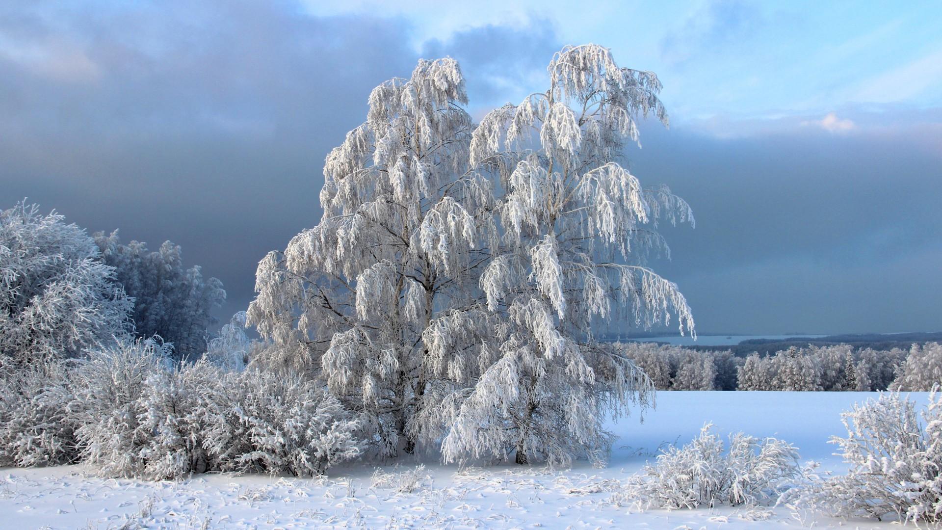 Картинки картинки зимы