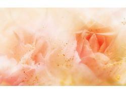 Фоны фото цветы 7