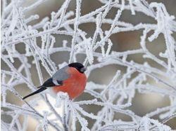 Фото зима с ьольшим разрешением 7