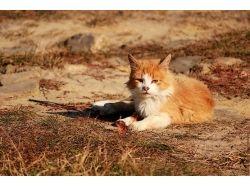 Рыжая кошка осень фотографии 7