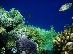 Море фото подводный мир 7