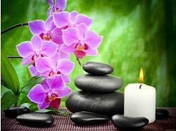 Картинки вода орхидеи и камни