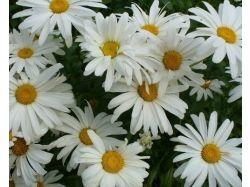 Картинки цветы луга