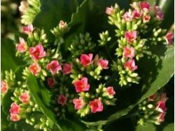 Орхидеи элитные фото цветы