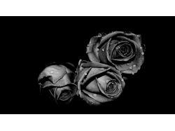 Черно белые широкоформатные картинки