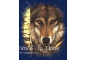 Картинки сказочного волка