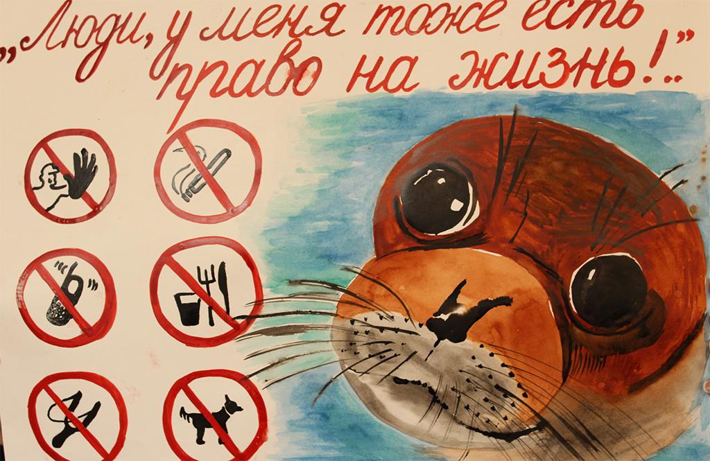 назван картинки как защитить животных этом