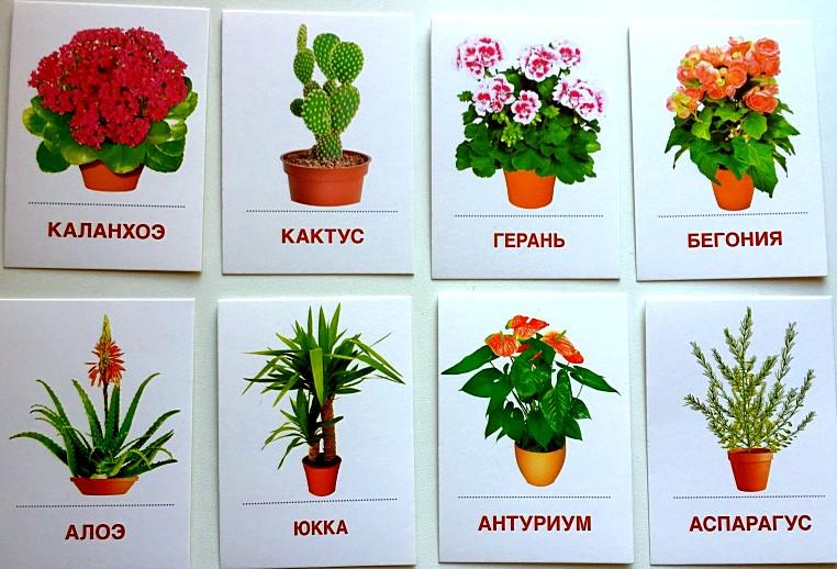 Оформление название цветов картинки
