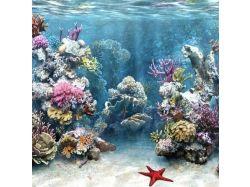 Анимационные рабочий стол подводный мир
