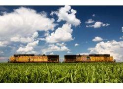 Поля пшеницы широкоформатные фотографии