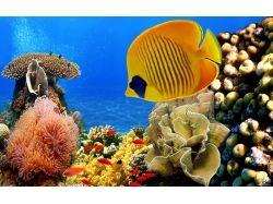 Кораллы подводный мир