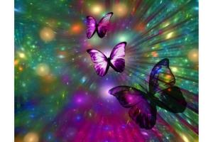Бабочки на рабочий стол