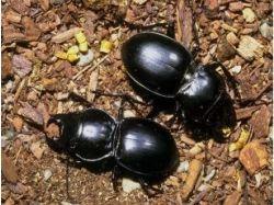 Удивительные насекомые фото бесплатно