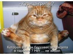 Клевые и прикольные картинки котов