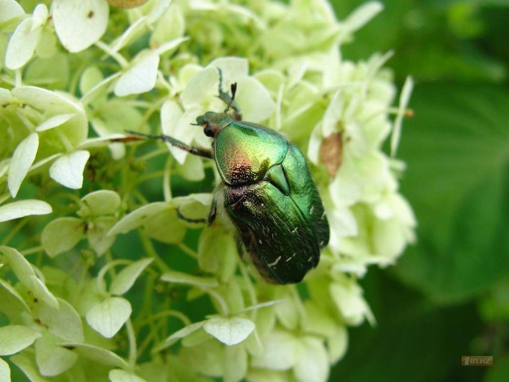 той картинка первые насекомые всё никак