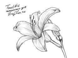 Красивые картинки карандашом цветы и сердца