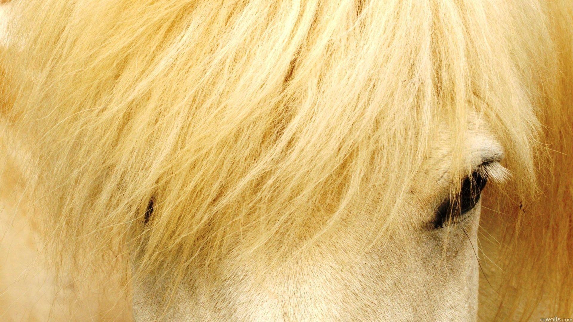 лошадь лицо животное природа загрузить