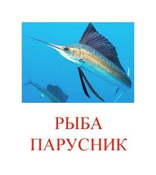 выборе термобелья как нарисовать рыбу парусник белье