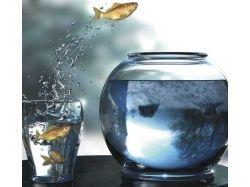 Прикольные фотографии рыб