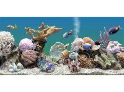 Заставка на комп аквариум скачать бесплатно