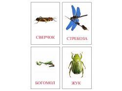Картинки насекомые для детей распечатать