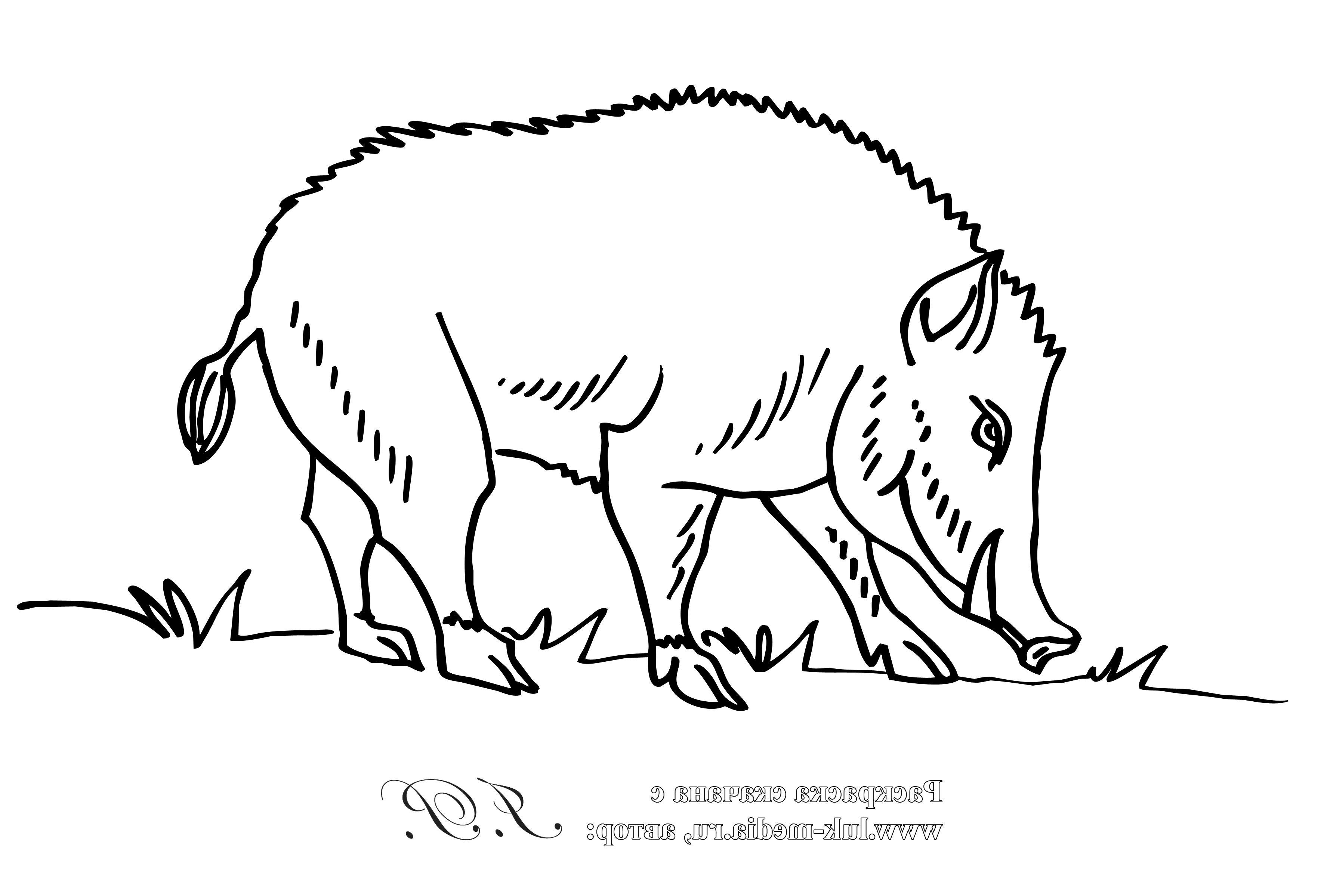 Картинки диких животных для раскраски распечатать