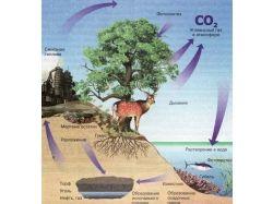 Взаимосвязь природы и общества