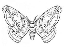 Раскраска бабочка распечатать