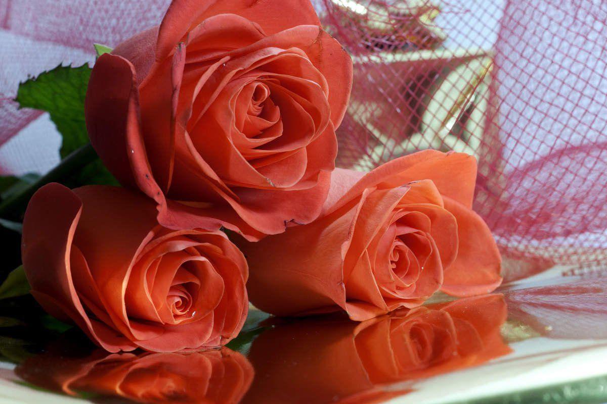 Поздравления марта, фото музыкальных открыток или обложек красивые розы