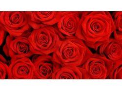 Букет роз картинки