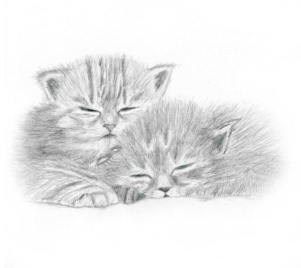 Картинки котята милые нарисованные карандашом, пожеланием приятного