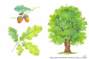 Картинки деревьев для детей детского сада