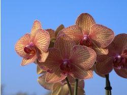 Заставки фото цветы орхидеи