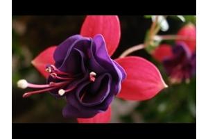 Очень красивые цветы картинки