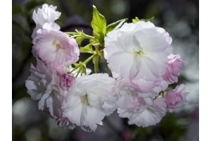 Картинки цветы весны