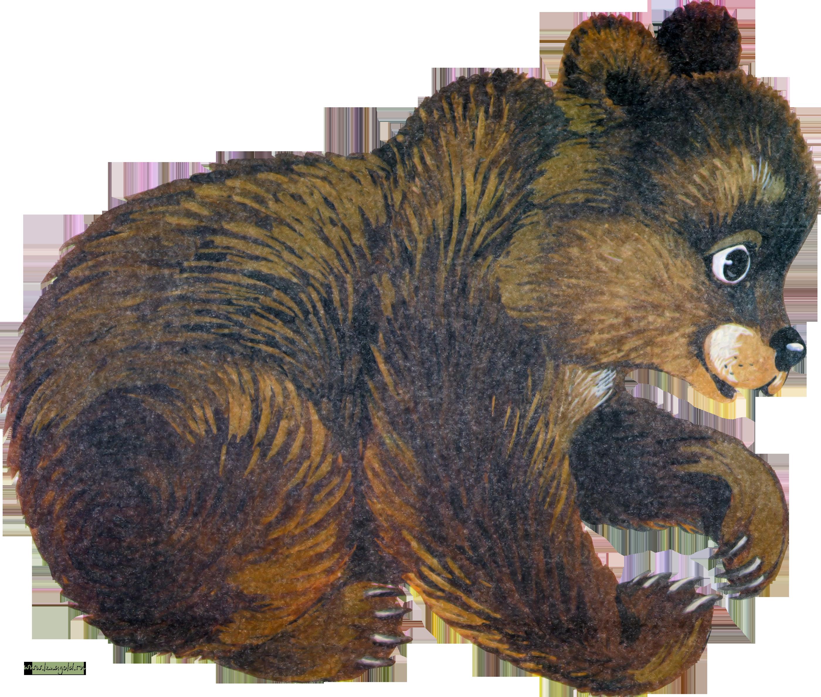 Медведь в картинках для детей