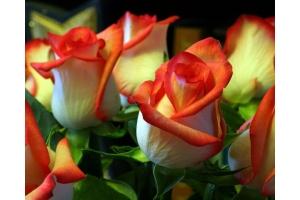 Цветы картинки скачать бесплатно