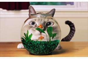 Прикольные фото котята